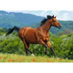 Castorland Puzzle Reddish - hnedý kôň, 1000 dielov
