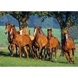 Castorland Puzzle Kvartetá koní, 1500 dielov
