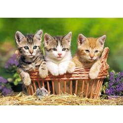 Castorland Puzzle Tri pôvabné mačiatka, 500 dielov
