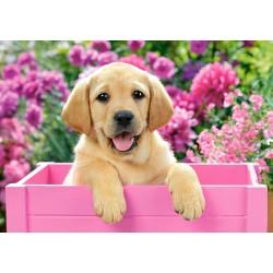 Castorland Puzzle Šteniatko Labradora v ružovom boxe, 500 dielov