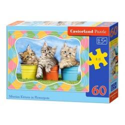 Castorland Puzzle Sibírske mačiatka v kvetinači, 60 dielikov